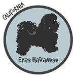 California Havanese Breeders