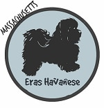 Massachusetts Havanese Breeders