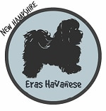 New Hampshire Havanese Breeders