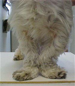 Chondrodysplasia Legs together