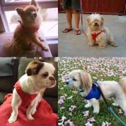 Harnesses by Comfort Fit Pets